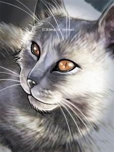 gattogrigio