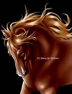 horse16b